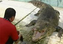 visitantes também são convidados a acariciar filhotes de crocodilos